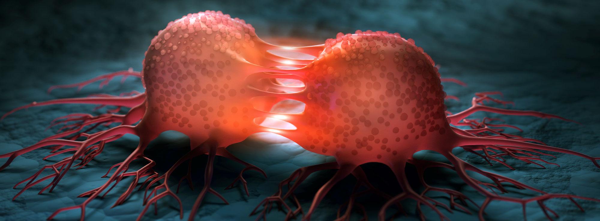 Darmkrebsprävention in Berlin Zehlendorf Schlachtensee Gastroenterologie Gastroenterologie Koloskopie, Proktoskopie, Kapsel-Endoskopie, immunologischer Test