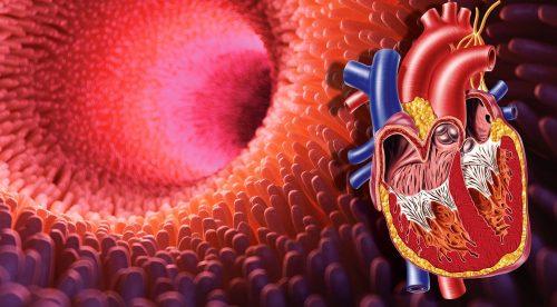 Vorsorge Prävention Krebsvorsorge Gewichtsreduktion Abnehmen Übergewicht Herzinfarkt Bluthochdruck Diabetes Schlaganfall Darmkrebs Ernährungsberatung Ernährungsmedizin